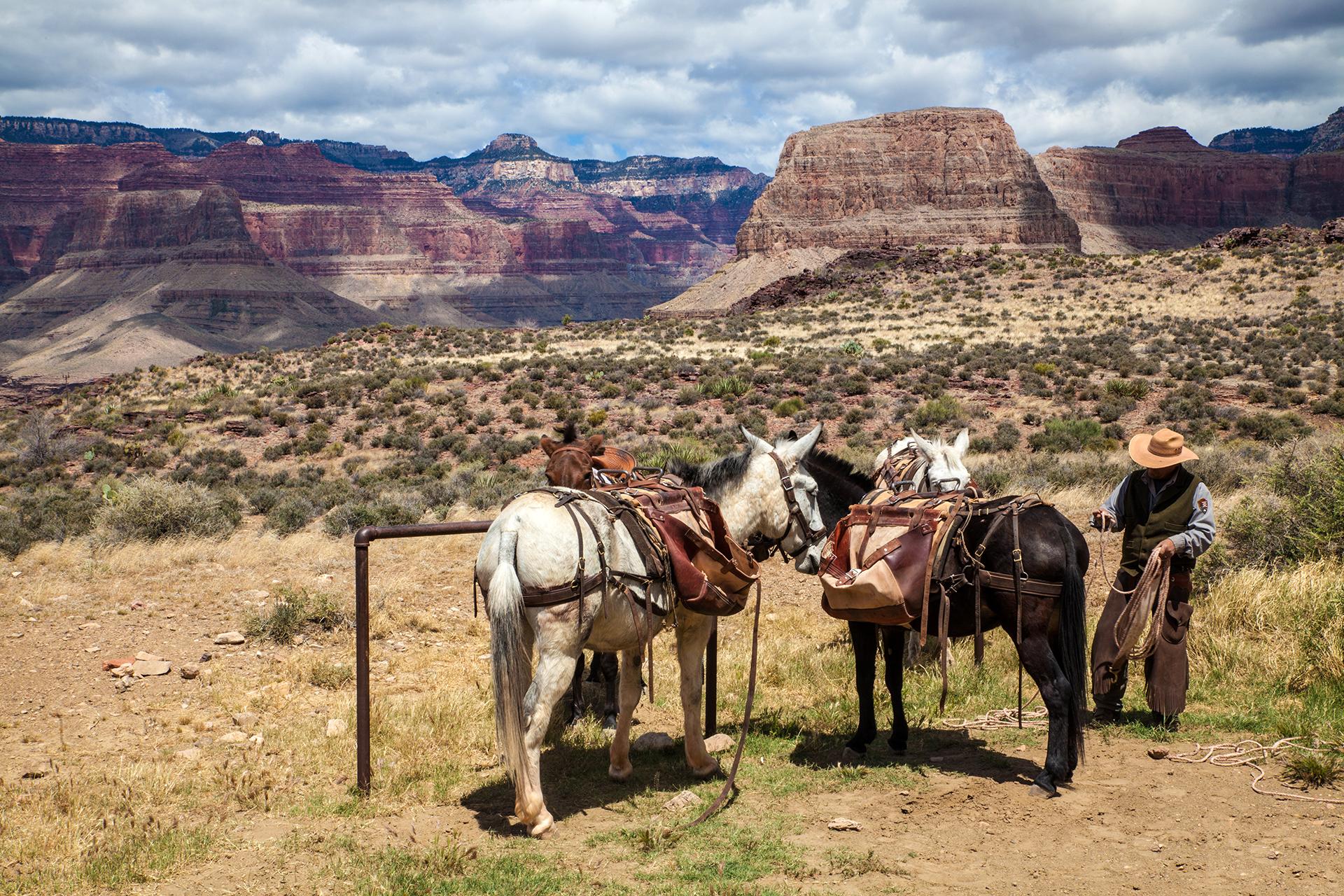 Grand Canyon01